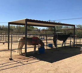ATHA horses love their new shade