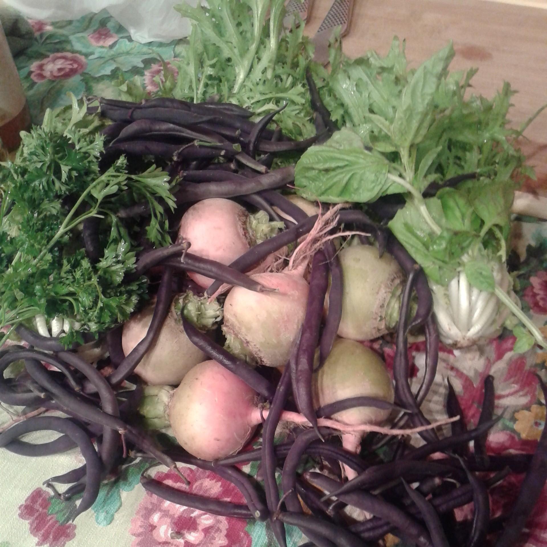 frisee, radishes + beans