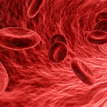 Should Endurance Athletes give blood?