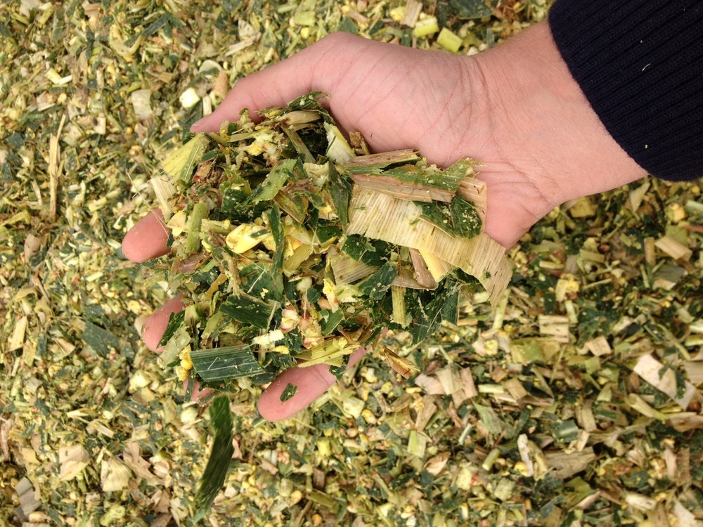 Tips On Storing Silage During Harvest