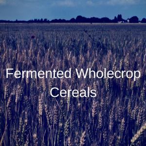 Fermented Wholecrop Cereals