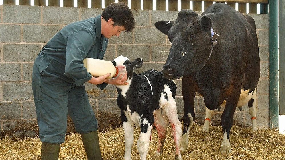 Importance Of Colostrum