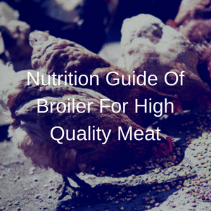 Nutrition Guide Of Broiler For High Quality Meat