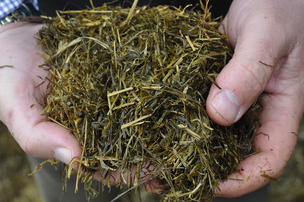 Fluctuations In Silage Digestibility