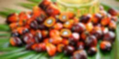 Palm Oil Guide