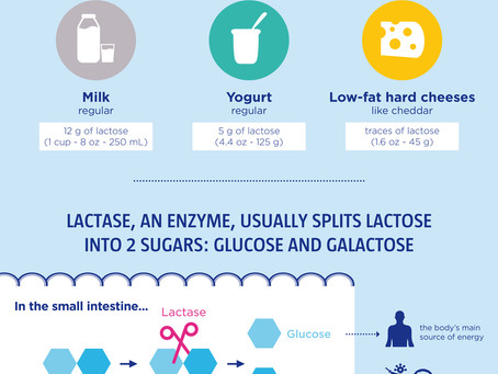 Lactose Is The Sugar Naturally Found In Dairy (Infographic)