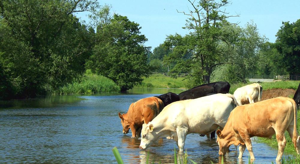 Water - The Nutritional Secret