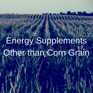 Energy Supplements Other Than Corn Grain
