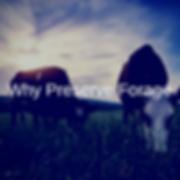 Why Preserve Forage