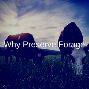 Why Preserve Forage