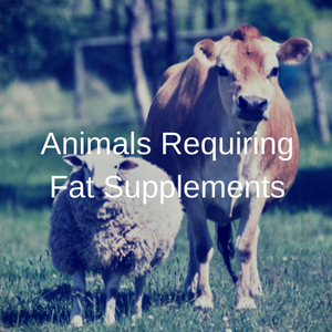Animals Requiring Fat Supplements