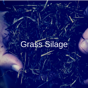 Grass Silage
