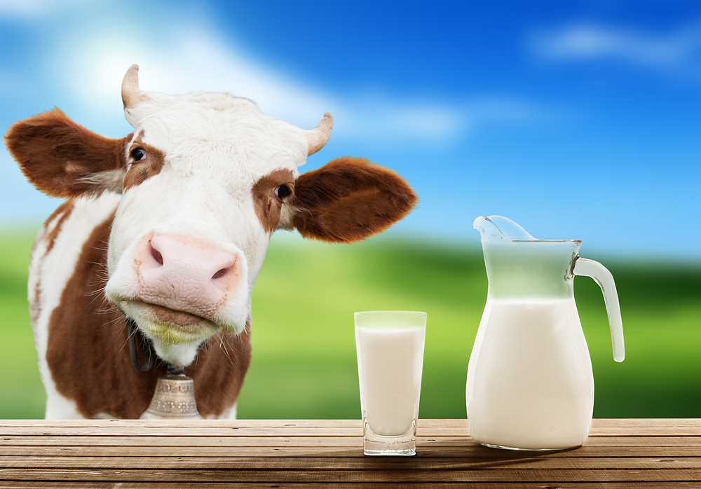 10 Things To Consider When Milk Market Declines