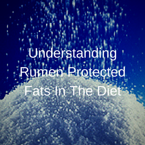 Understanding Rumen Protected Fats In The Diet