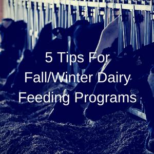 5 Tips For Fall/Winter Dairy Feeding Programs