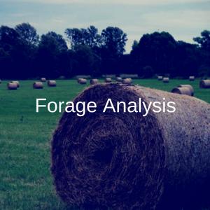 Forage Analysis