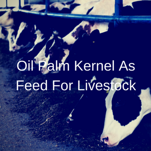 Oil Palm Kernel As Feed For Livestock