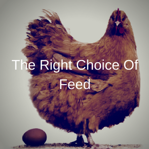 The Right Choice Of Feed