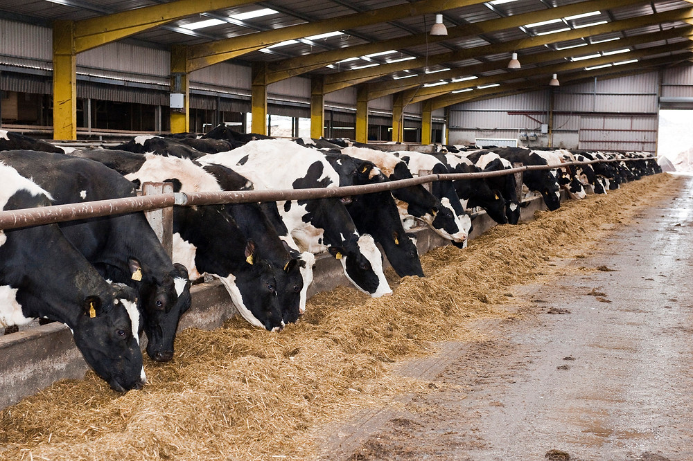 Challenges Of Monitoring Feed Ingredient Quality