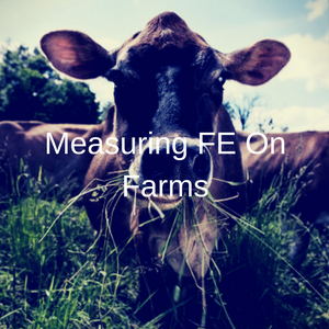 Measuring Feed Efficiency On Farms