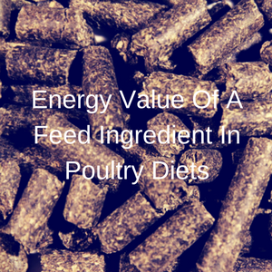 Energy Value Of A Feed Ingredient In Poultry Diets