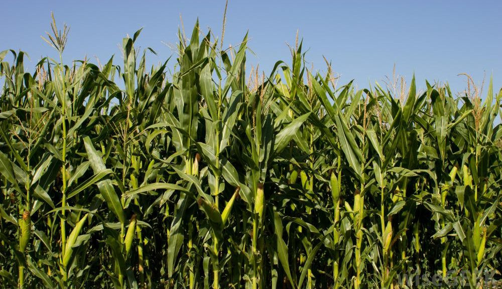 What Is The Ideal Forage Particle Size?