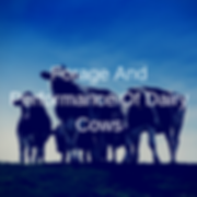 Forage And Performance of Dairy Cows