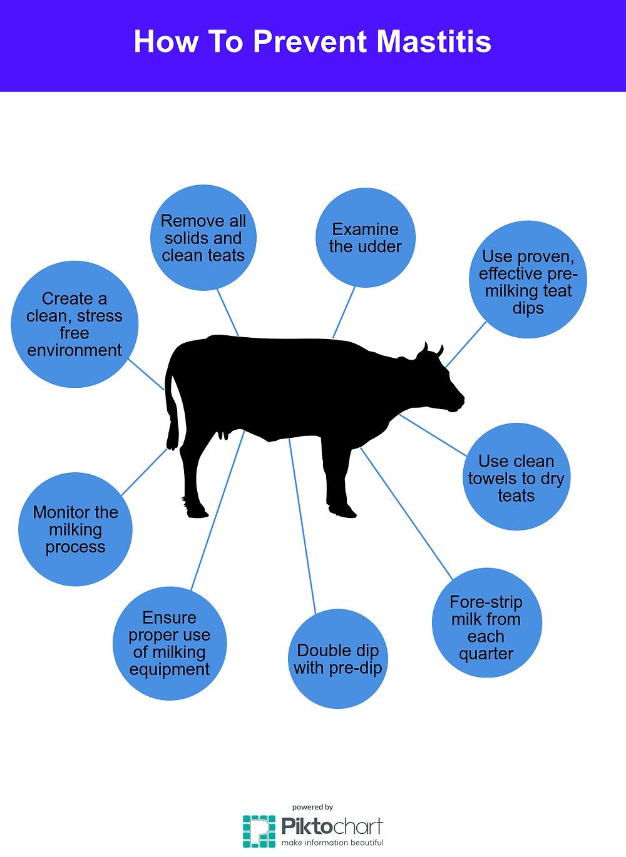 How To Prevent Mastitis (Infographic)