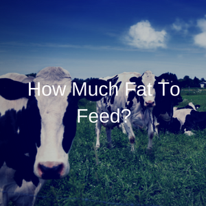 How Much Fat To Feed?