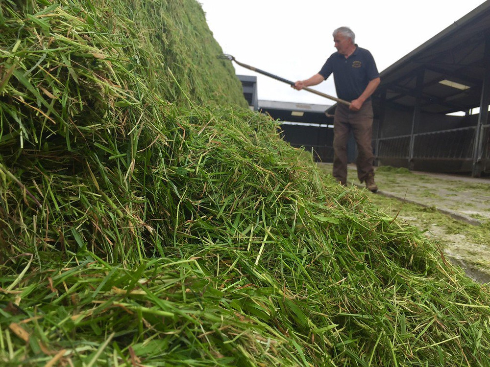 Grass Silage Considerations