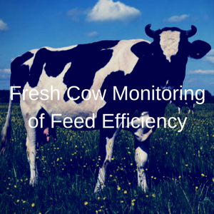 Fresh Cow Monitoring Of Feed Efficiency