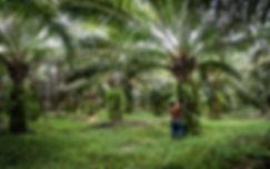 Where Is Palm Oil Grown?