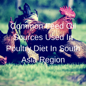 Common Feed Oil Sources Used In Poultry Diet In South Asia Region