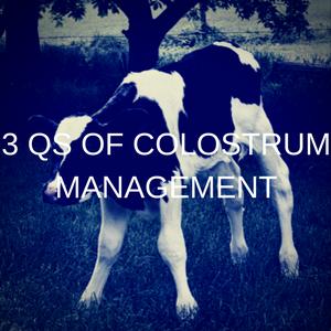 3 Qs Of Colostrum Management