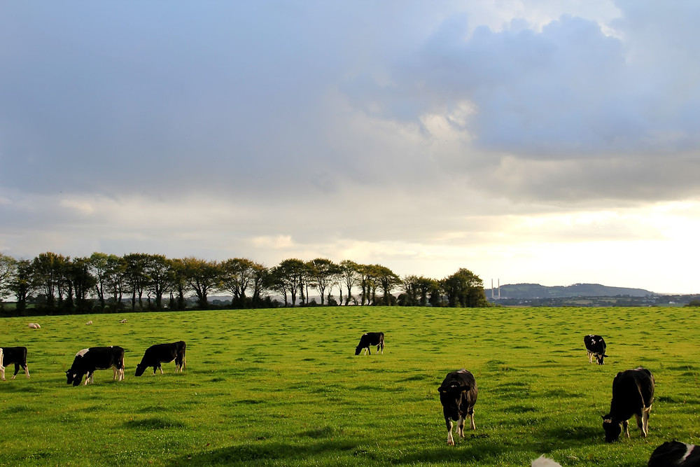 Pasture Management Using Cattle Supplements