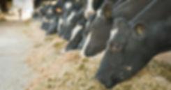 Top 5 Tips For Fall/Winter Dairy Feeding Program