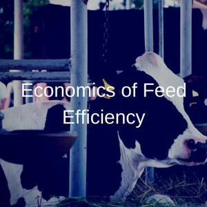 Economics of Feed Efficiency