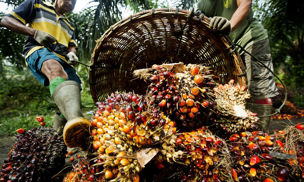 Why Is Palm Oil Important?