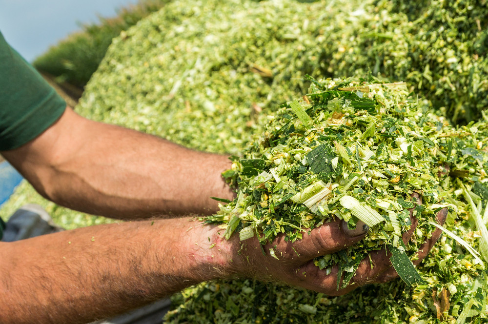 Strategies To Increase Nutritive Value of Corn Silage