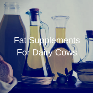 Fat Supplements For Dairy Cows