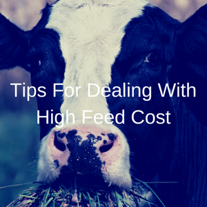 Tips For Dealing With High Feed Cost
