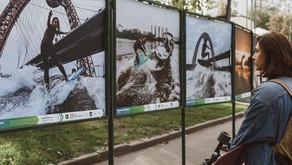 """Выставка Провейксерф """"Серфинг в городе"""" 2019"""