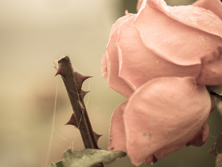 My Pencil Is Covered in Sharp Rose Thorns