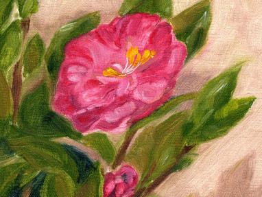WHY I PAINT CAMELLIAS?