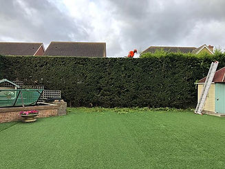 Spot of hedge trimming we squeezed in th