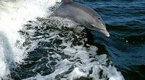 dolphin.jpeg