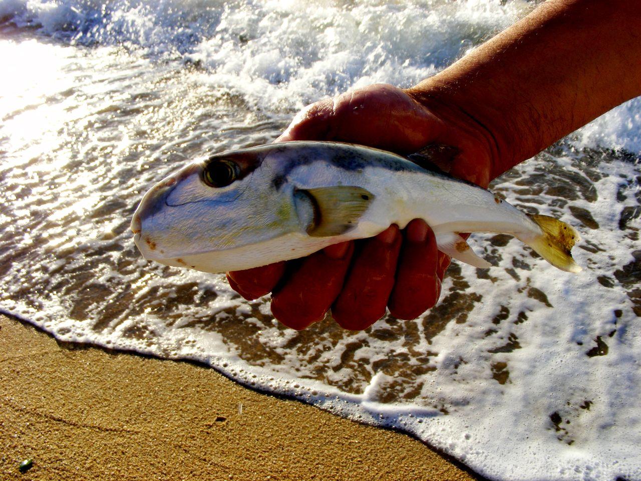 Peixe da região