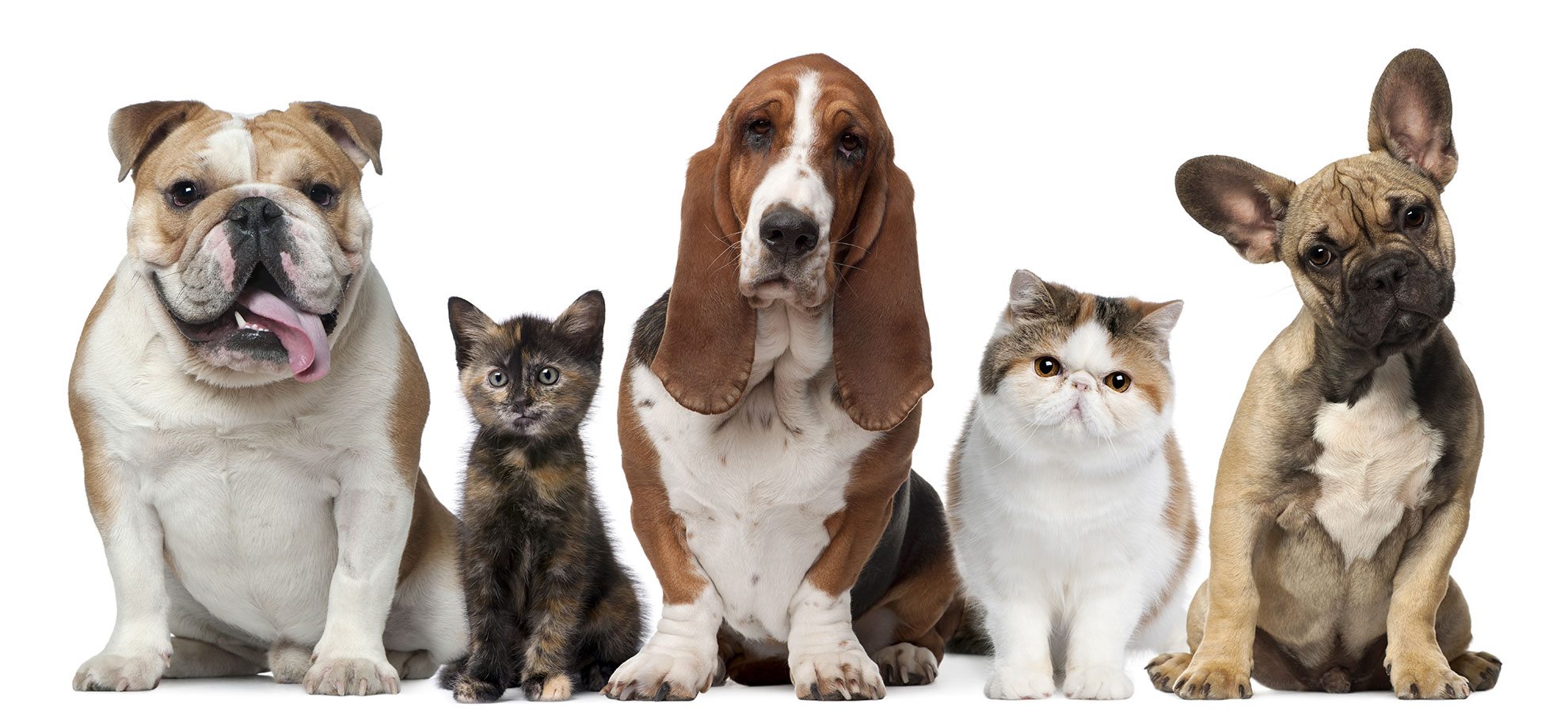 clinica_veterinaria_Ponte_grande_slider1