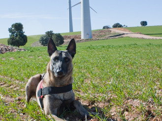 Workshop: The use of Detection Dogs on Biodiversity and Conservation Studies
