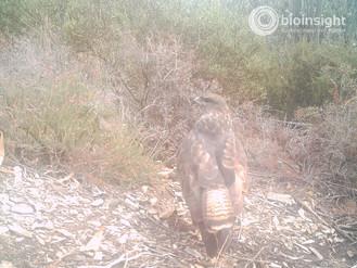 Biodiversity Monitoring Campaign Using Camera-Trapping Technics